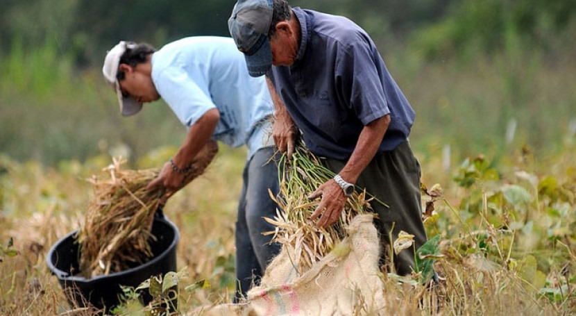 ¿Cuáles son necesidades productores maíz y fríjol Colombia?