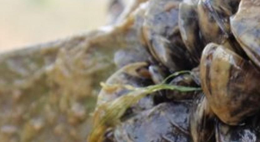 Andalucía anima población luchar expansión mejillón cebra