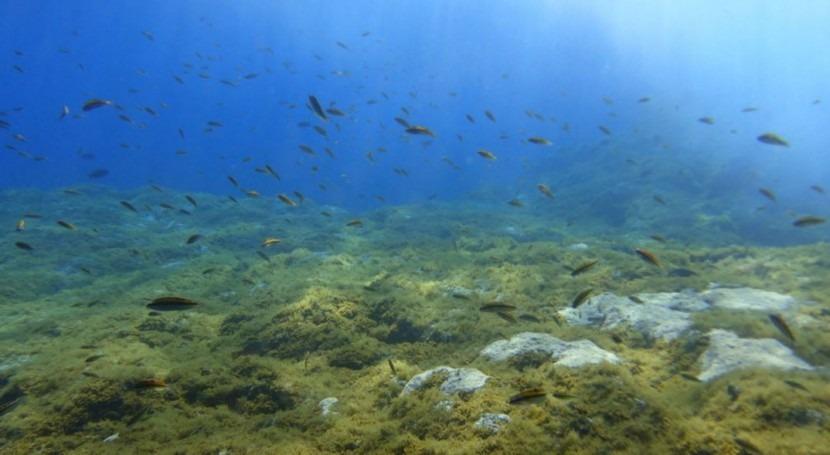 afloramiento submarino CO2 Palma permitirá estudiar océano futuro