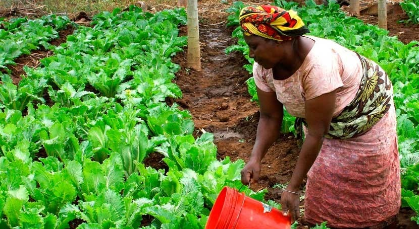 cambio climático cambia concepción agricultura Etiopía