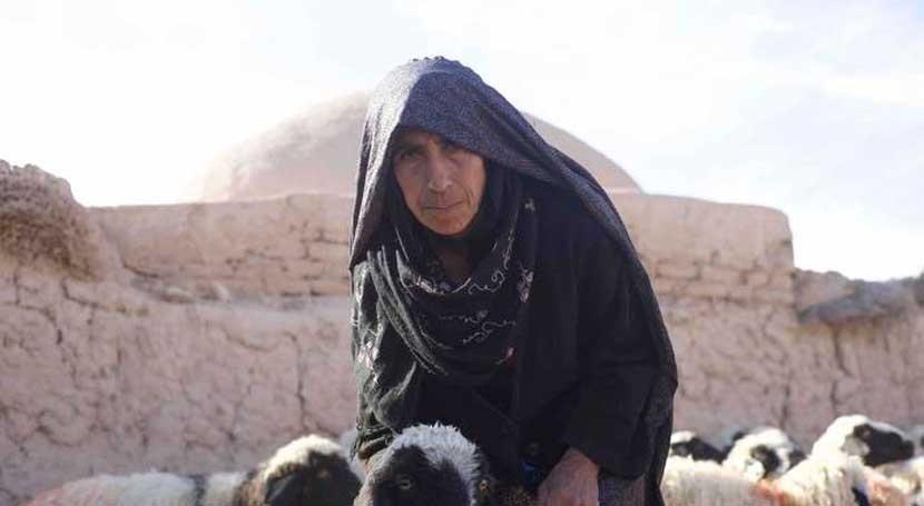 agricultores afganos afectados sequía recibirán ayudas forma semillas y piensos