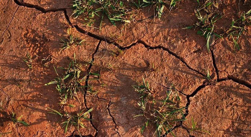 sequía Murcia causa pérdidas 40% facturación exportación productos agrícolas