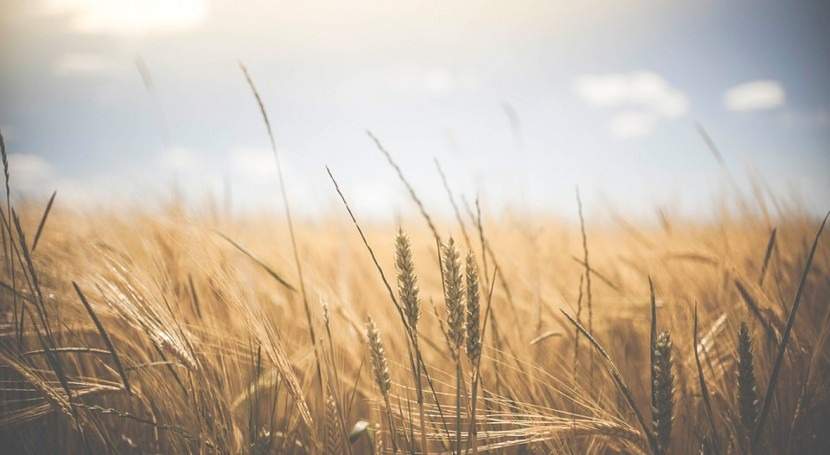 """Colaboración FAO-MAPAMA marco """"Pacto Global escasez agua y agricultura"""""""
