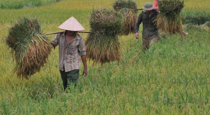 Ahorrar crecer: agricultura basada ecosistemas alcanza madurez