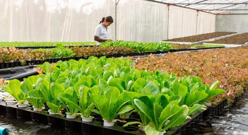 agricultores siembran futuro resiliente al clima América Latina