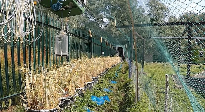 estudio identifica riesgo agrícola derivado contaminantes aguas residuales
