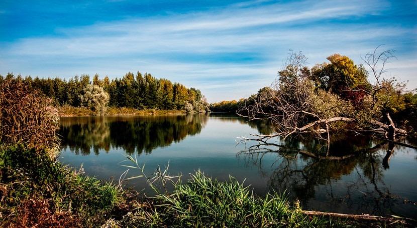 cuencas hidrográficas más árboles están menos asociadas enfermedades diarreicas