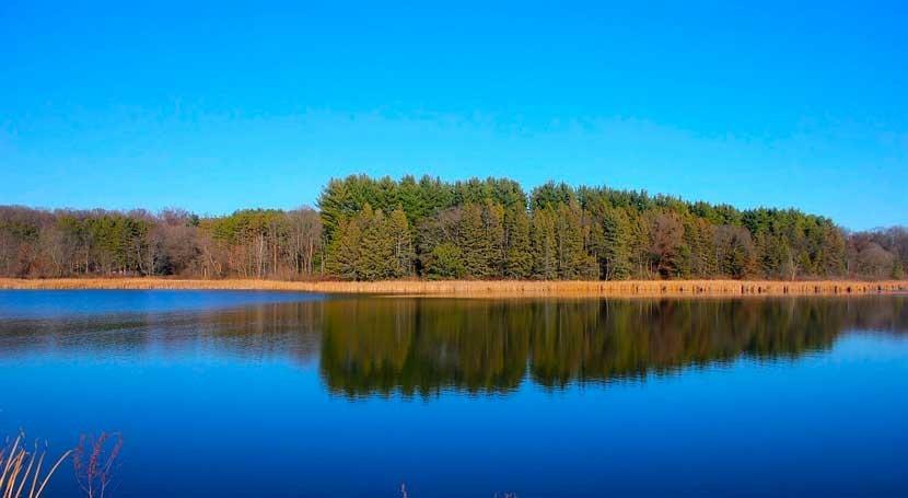 Agua y bosques: 7 aspectos que tal vez no conozcas
