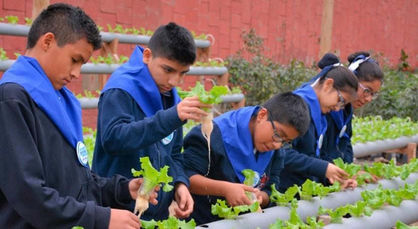 Agua para criar peces y sembrar plantas una idea premiada for Peces para criar