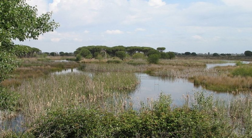 modelización relación laguna-acuífero mantos eólicos Doñana, realidad