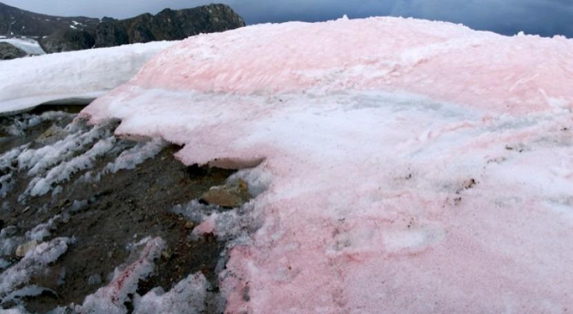 algas rojas aceleran deshielo Ártico