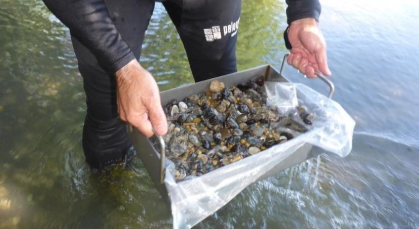 CHE realiza primera vez muestreos almeja asiática Eje Ebro