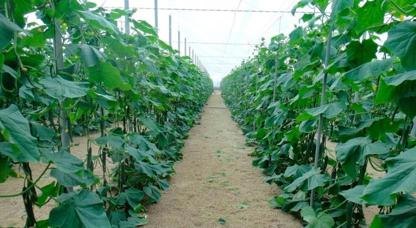 CHG amplía campaña riego hortícolas, cítricos, frutales y olivar