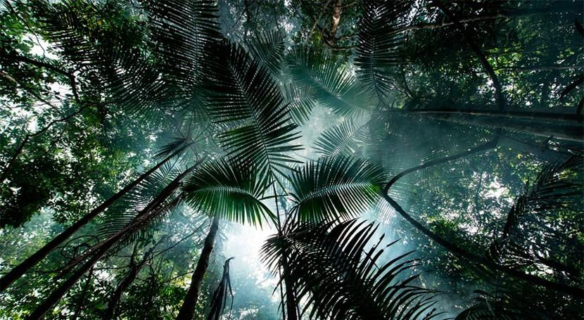 La Amazonia, en grave peligro por los mega proyectos