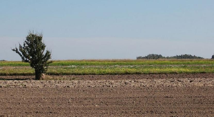 ¿Cómo reducir emisiones amoniaco causadas fertilización suelos agrícolas?