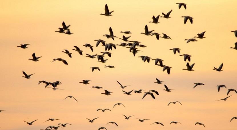 cambio climático desplaza zonas invernada aves migratorias