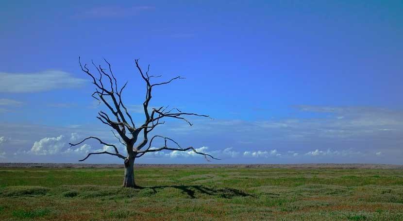 periodos lluvias y altas temperaturas podrían estar provocados calentamiento global