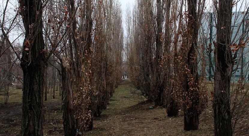 Confederación Duero celebra subasta aprovechamiento maderable masas arbolado