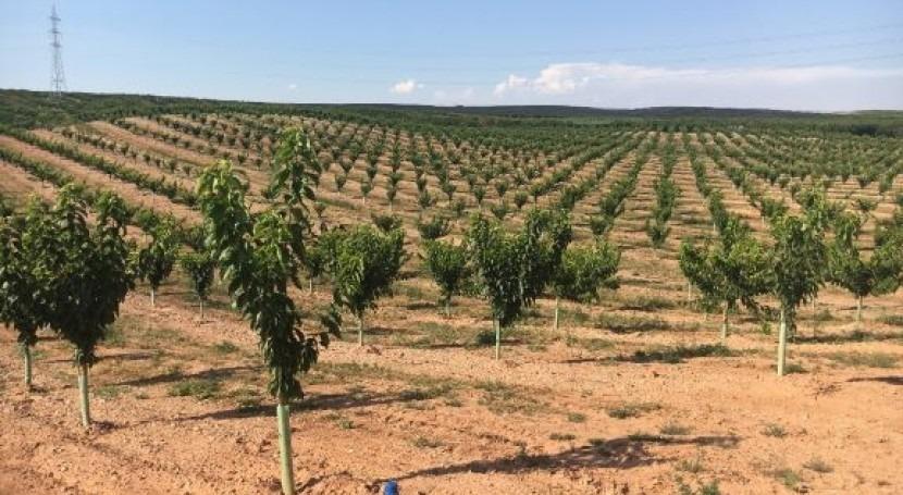 Riego RGSSDI frutales: alternativa obtener fruta más calidad y menor coste