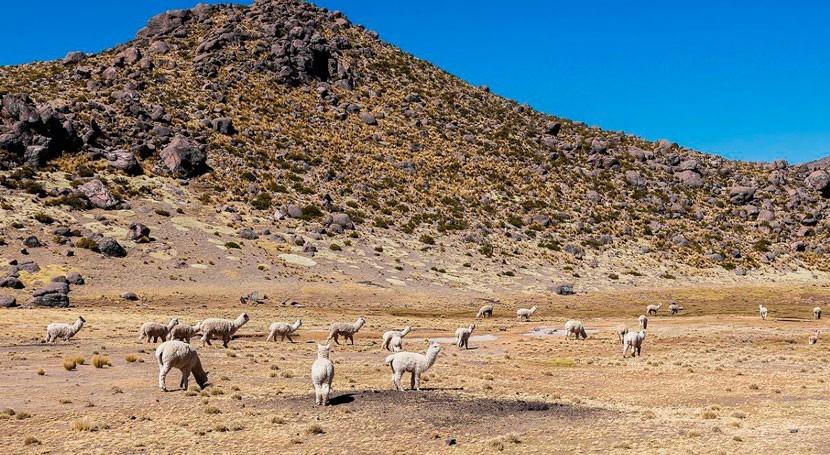 Proyecto Ayninakuy: Comunidades altoandinas Arequipa se adaptan al cambio climático