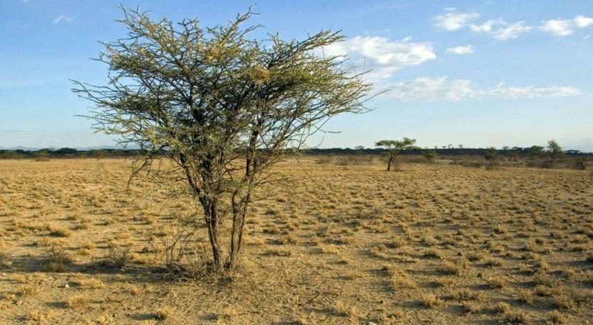 aumento aridez disminuye diversidad bacterias y hongos suelo ambientes áridos
