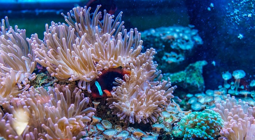 arrecifes coral reducen daños causados inundaciones