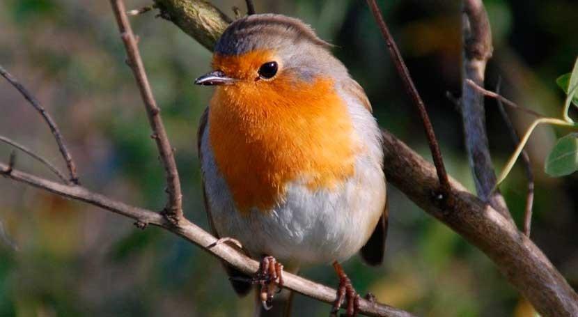 ¿Qué aves pierden y ganan cambio climático?