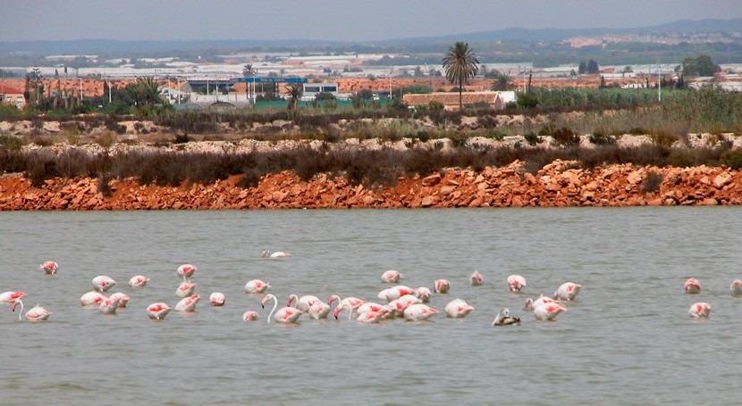 Salinas San Pedro Pinatar, tres charcas gran diversidad aves
