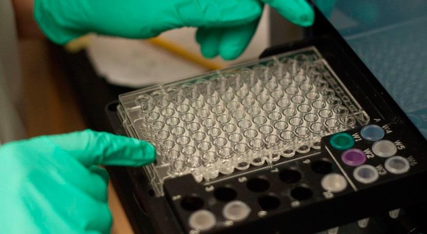 bacteria poco común contribuye eliminación nitrógeno océanos