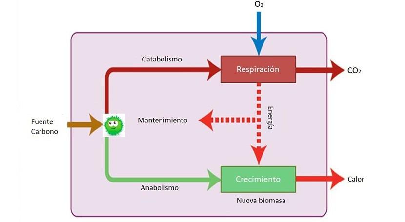 Biorremediación y bacterias: ¿cómo funcionan?