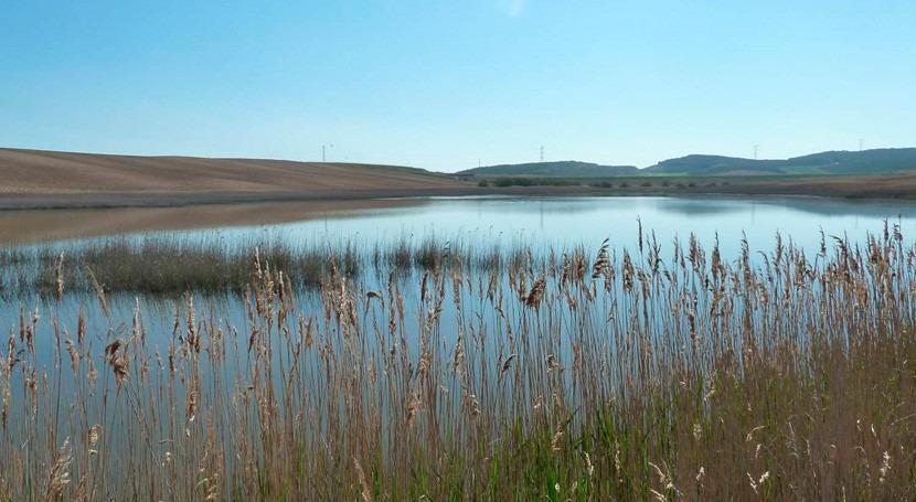 humedales Laguna Pitillas, Balsa Pulguer y Badina Escudera Navrara, designados ZEC
