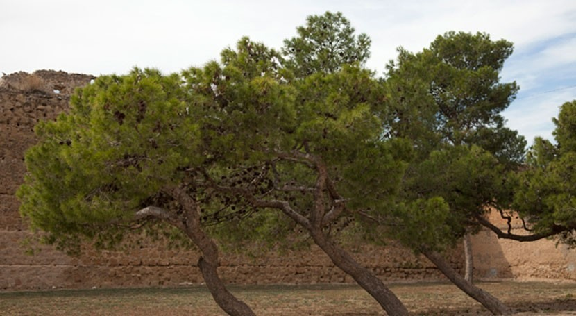 Aprobado último tramo regadío canal Algerri-Balanger Lleida