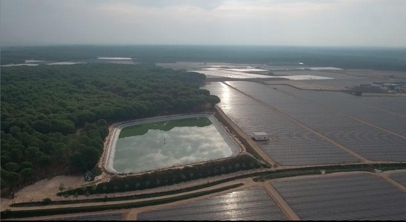 Continúa aumento regadíos Doñana que se ponga fin, WWF