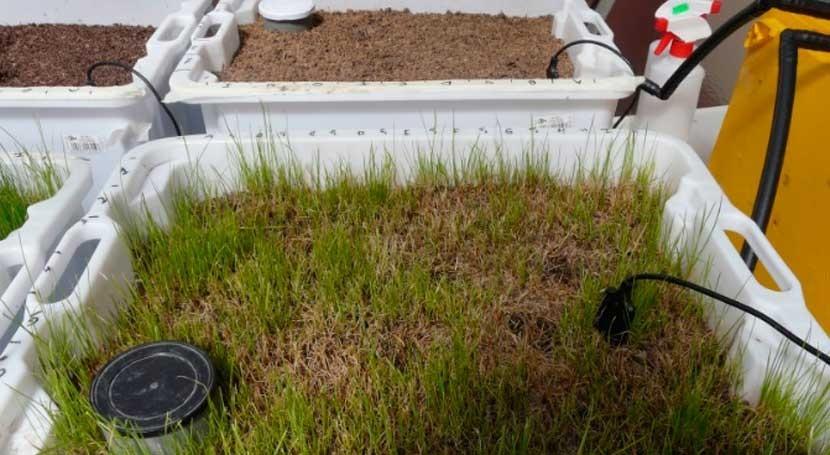 residuos aceite oliva pueden eliminar restos fármacos aguas residuales