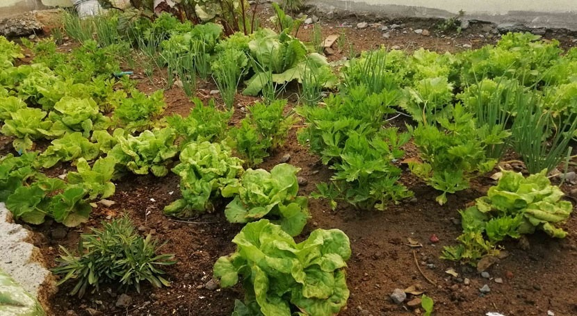 proyecto escolar peruano recicla agua regar cultivos