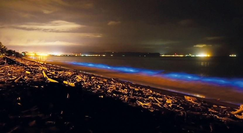 Bioluminiscencia: reacción química que ilumina aguas