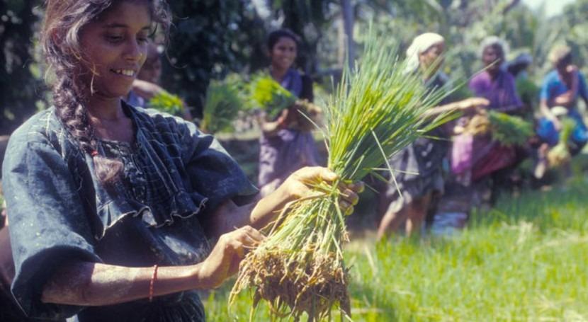 biotecnología ayuda agricultores familiares enfrentar cambio climático