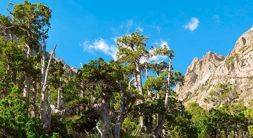 cambio climático afectará negativamente bosques América Sur año 2065