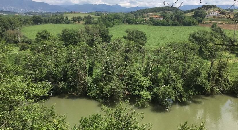 Life ALNUS: protegiendo y potenciando bosques alisos cursos altos ríos