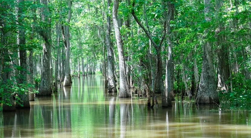 humedal tierra seca: ¿cómo sobrevivieron primeros vertebrados?
