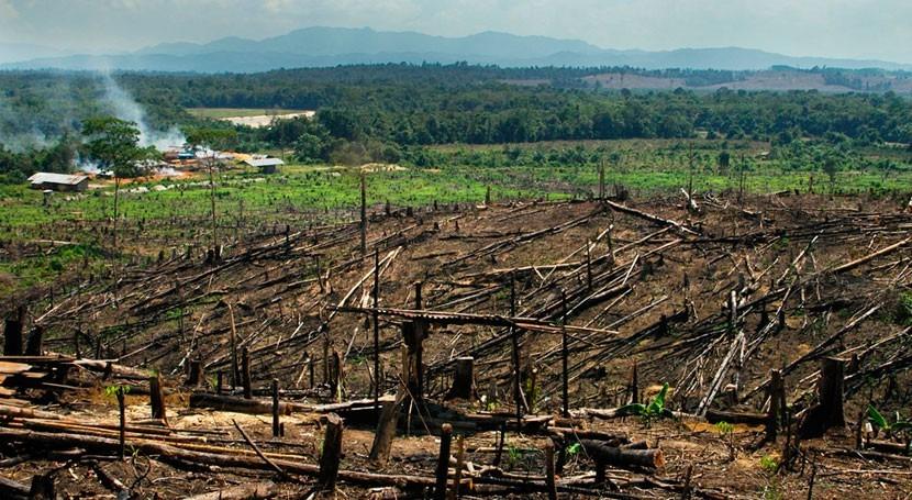 humanidad avanza contrarreloj revertir cambio climático