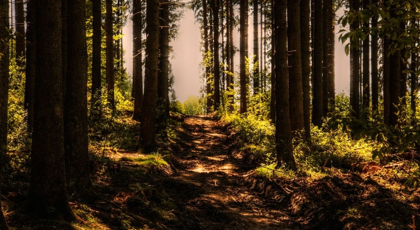 bosques diversos sufren menos impactos sequía
