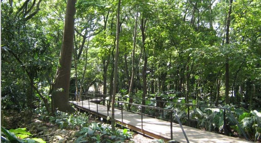 Las enfermedades de los rboles ayudan a su adaptaci n a for Arboles jardin botanico