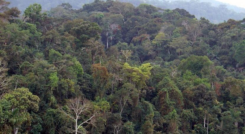 sequías podrían matar árboles más altos selvas tropicales