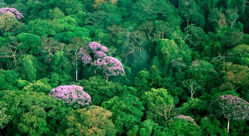 ¿Cómo afecta sequía al recrecimiento bosques tropicales?