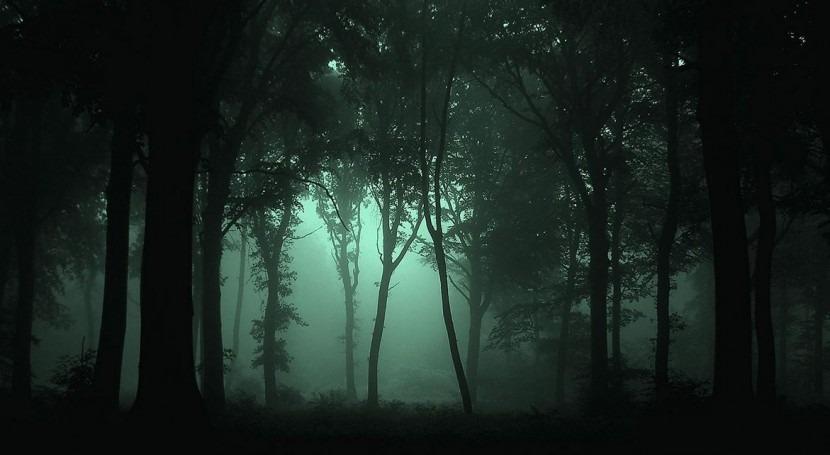 bosques mundo siguen disminuyendo, pero también tasa deforestación