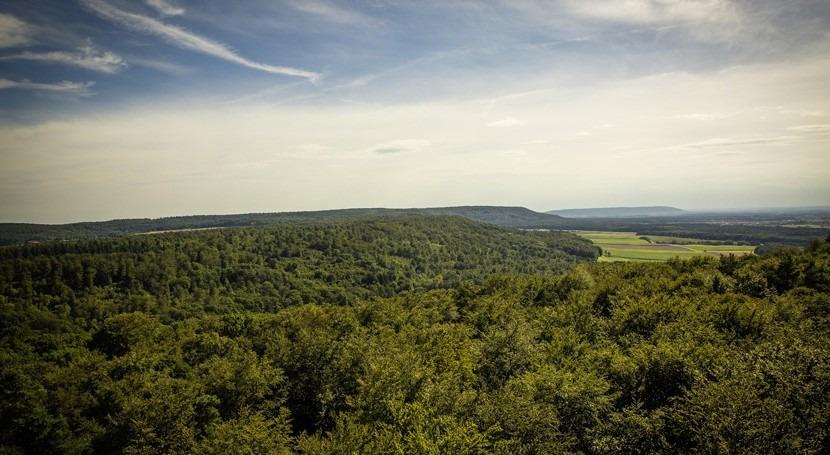 IIAMA desarrolla modelo hidroeconómico optimizar gestión bosques y agua