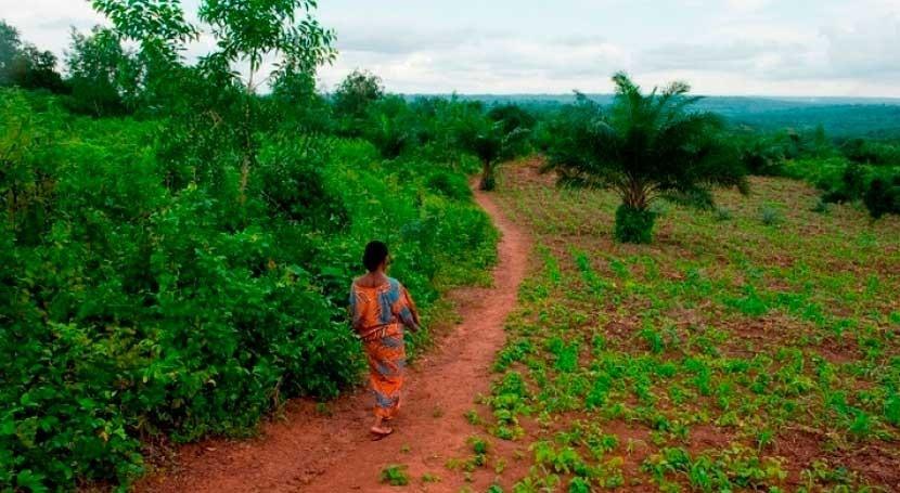 ¿ qué bosques son fundamentales agua, clima y salud?