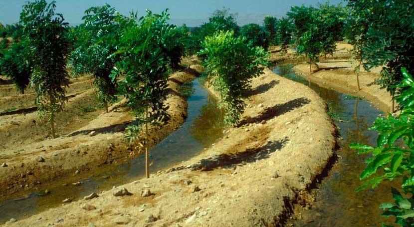 ¿Cómo aprovechar contribución bosques seguridad hídrica África occidental?