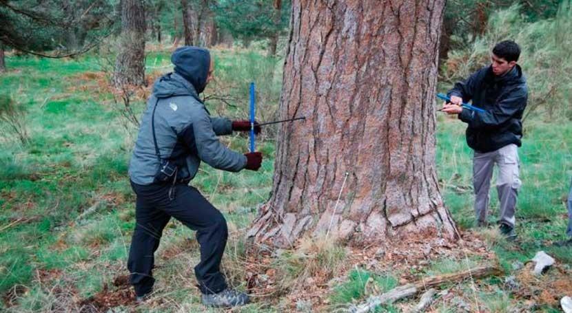 cambio climático sincroniza crecimiento bosques